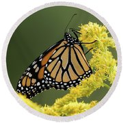 Monarch On Goldenrod Round Beach Towel