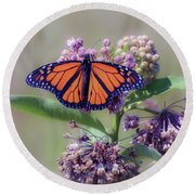 Monarch On The Milkweed Round Beach Towel