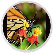 Monarch Pollination 1 Round Beach Towel
