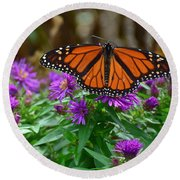 Monarch Spreading Its Wings Round Beach Towel