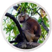 Monkey In Tree Round Beach Towel