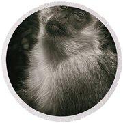 Monkey Portrait Round Beach Towel