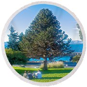 Monkey Puzzle Tree In Central Park In Bariloche-argentina  Round Beach Towel
