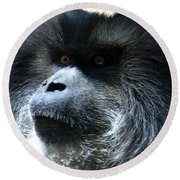 Monkey Stare Round Beach Towel