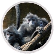 Monkey Trio Round Beach Towel