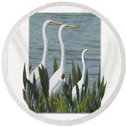 Montage With 3 Great White Egrets Round Beach Towel