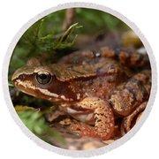 Moor Frog In September  Round Beach Towel