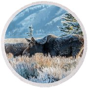 Moose In Cold Winter Ice Round Beach Towel
