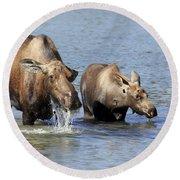 Moose Mama With Her Calf Round Beach Towel