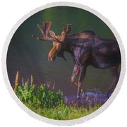 Moose On The Loose Round Beach Towel