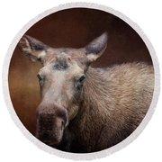 Moose Portrait Round Beach Towel