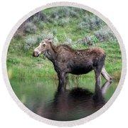 Moose Yellowstone Np_grk6918_05222018 Round Beach Towel