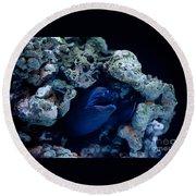 Moray Eel Or Muraenidae Fish Round Beach Towel