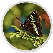 Mormon Metalmark Round Beach Towel