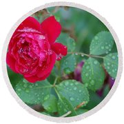 Morning Dew On A Rose Round Beach Towel