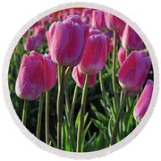Morning Dew Tulips Round Beach Towel