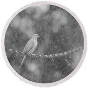Morning Dove In The Rain Round Beach Towel