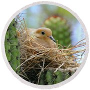 Mourning Dove Nest In A Cactus Round Beach Towel