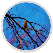 Morning Finch Round Beach Towel