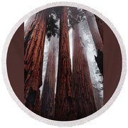 Morning Fog In Redwood Forest Round Beach Towel