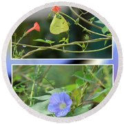 Morning Glories And Butterfly Round Beach Towel
