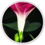 Morning Glory Stand Up Round Beach Towel