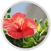 Morning Light Hibiscus Round Beach Towel