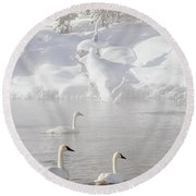 Morning Swan Trio  7845  Round Beach Towel
