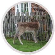 Morning Visitor Round Beach Towel
