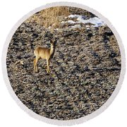 Morning. White-tailed Deer Round Beach Towel