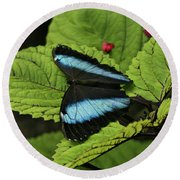 Morpho Butterfly Round Beach Towel