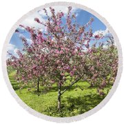Moscow, Pink Cherries In Kolomenskoye Park Round Beach Towel