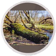 Moss Covered Log Round Beach Towel