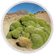 Moss Covered Rocks Round Beach Towel