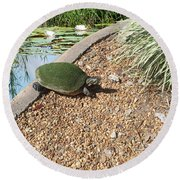 Moss Covered Turtle Round Beach Towel