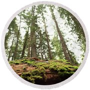 Moss On A Log Under The Cedars Round Beach Towel