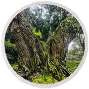 Mossy Old Tree Round Beach Towel