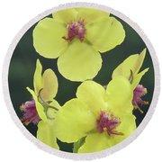 Moth Mullein Wildflowers - Verbascum Blattaria Round Beach Towel