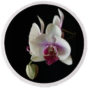 Moth Orchid 2 Round Beach Towel