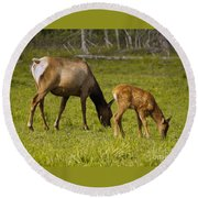Mother Elk And Fawn Round Beach Towel