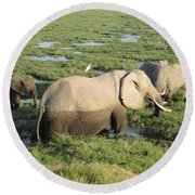 Mother And Calves Round Beach Towel
