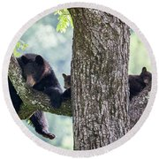 Mother Bear And Cubs Round Beach Towel