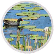 Mother Moorhen Round Beach Towel