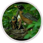 Mother Robin And Her Young Round Beach Towel