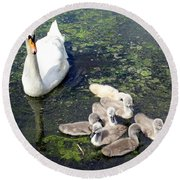 Mother Swan And Baby Cygnets Round Beach Towel