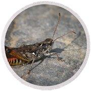 Mottled Grasshopper Round Beach Towel