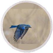 Mountain Bluebird Male In Flight Round Beach Towel
