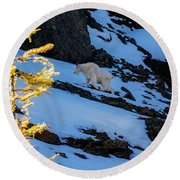Mountain Goat And Larches Round Beach Towel