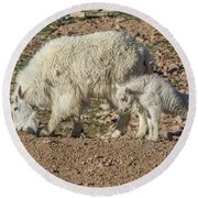 Mountain Goat Kid Stretches By Mom Round Beach Towel