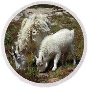 Mountain Goat Nanny And Kid Foraging At Columbine Lake - Weminuche Wilderness - Colorado Round Beach Towel